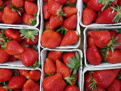 strawberries 6875_64